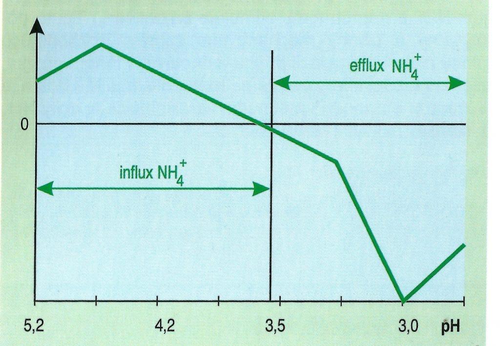 Vplyv pH  na aktívny influx a efflux