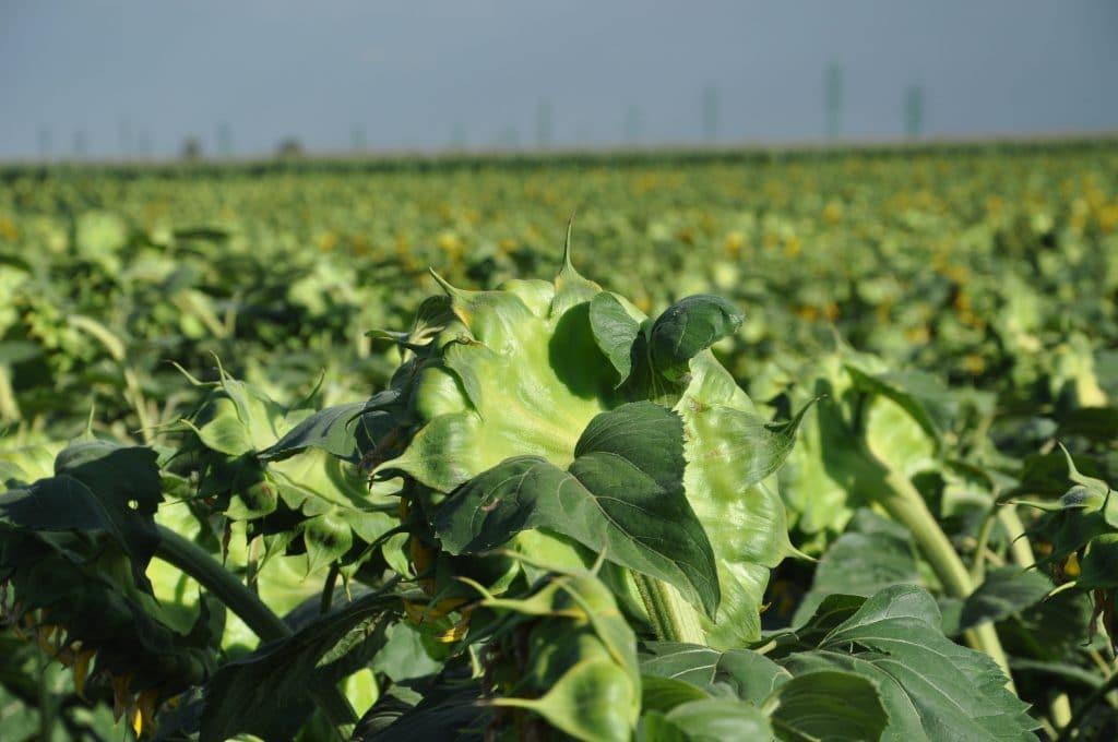 Vo všeobecnosti sa vychádza z predstavy, že rastliny sú prispôsobené na široký rozsah pH pôdy od 4 do 8.